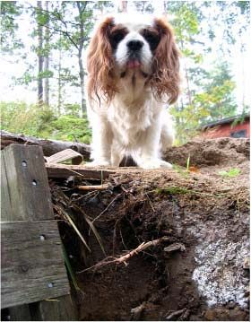 Kalle is unhappy about the hole in the garden.
