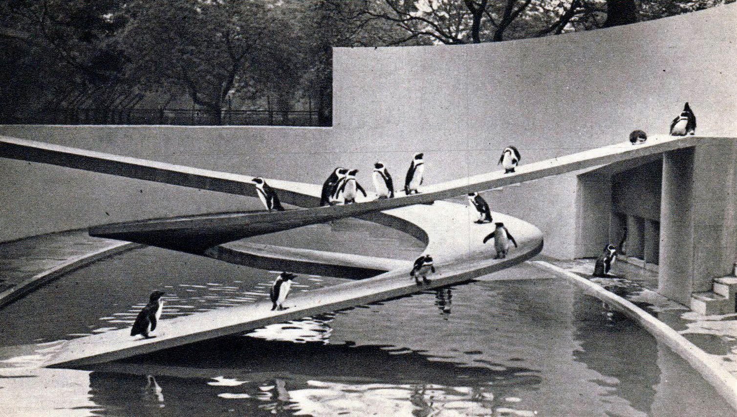 Berthold Lubetkin and Tecton's penguin enclosure, London Zoo, 1934. Photo: themodernist.co.uk.